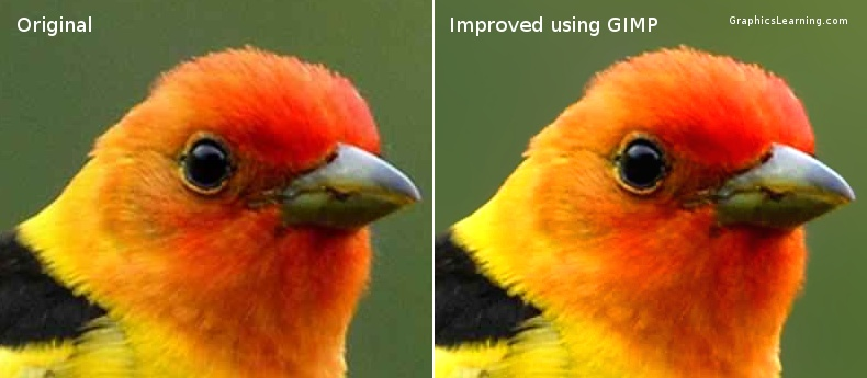 photo of a bird before and after improved using GIMP 2.7.3