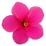 Flower 01 CC0